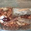 レッドアイのカブトムシの飼育ケース