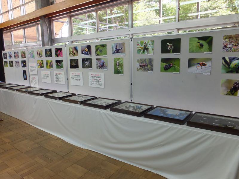 昆虫標本展1