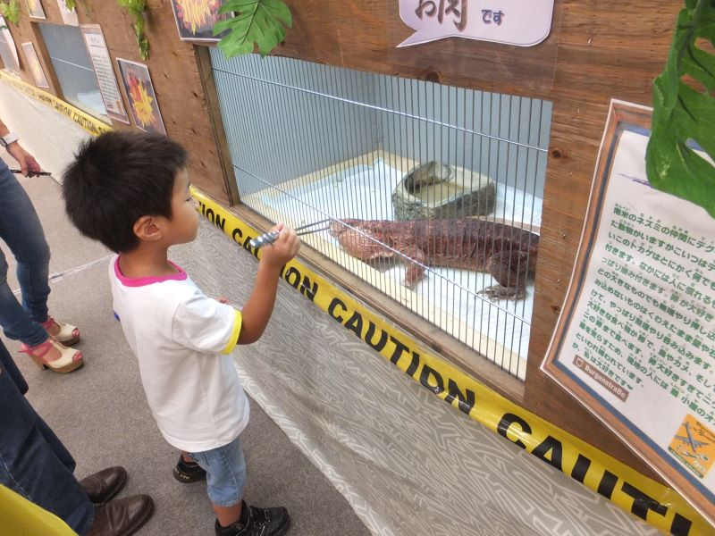 肉食トカゲに餌