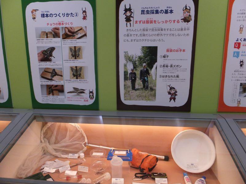 昆虫採集の道具
