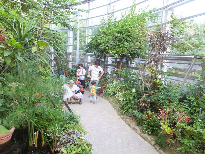 チョウ温室