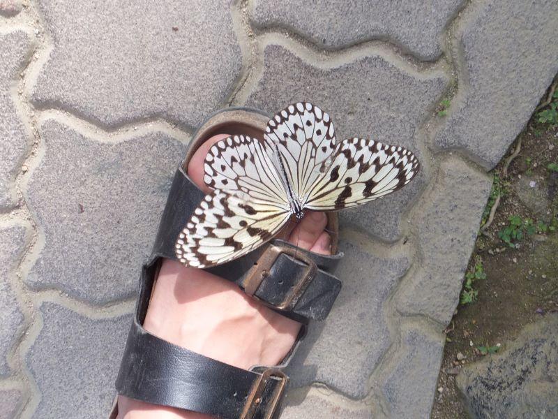 足にとまるチョウ