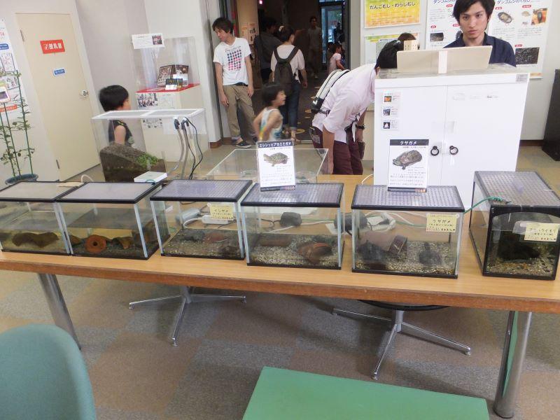 カメの展示