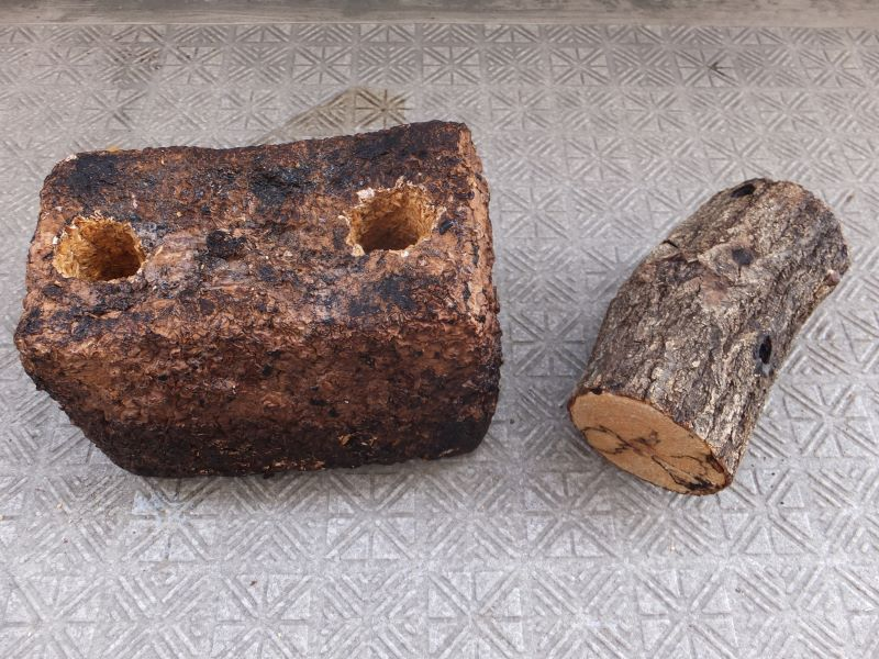 くち木とバイオくち木
