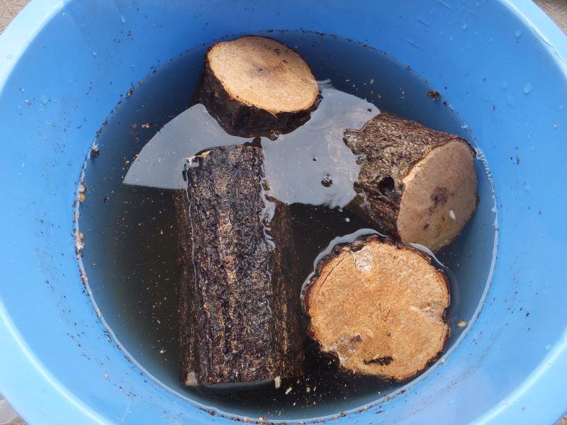水に漬けた朽木